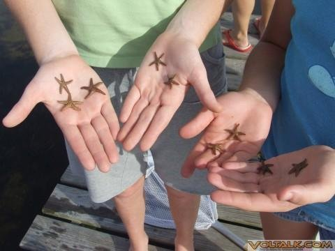 Cape San Blas, Fl. '07 - starfish